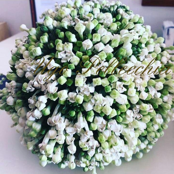 Bouvardia Bouquet Sposa.Wedding Services Ugo Pellecchia Piante E Fiori