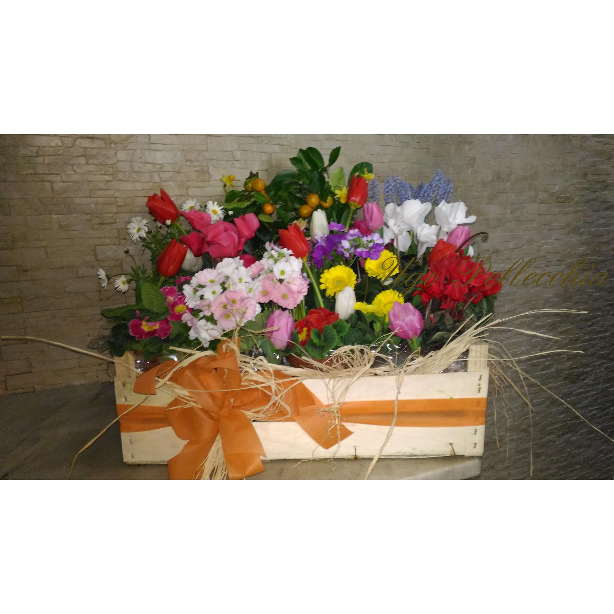 Plants cassetta di piante fiorite - Piante fiorite ...