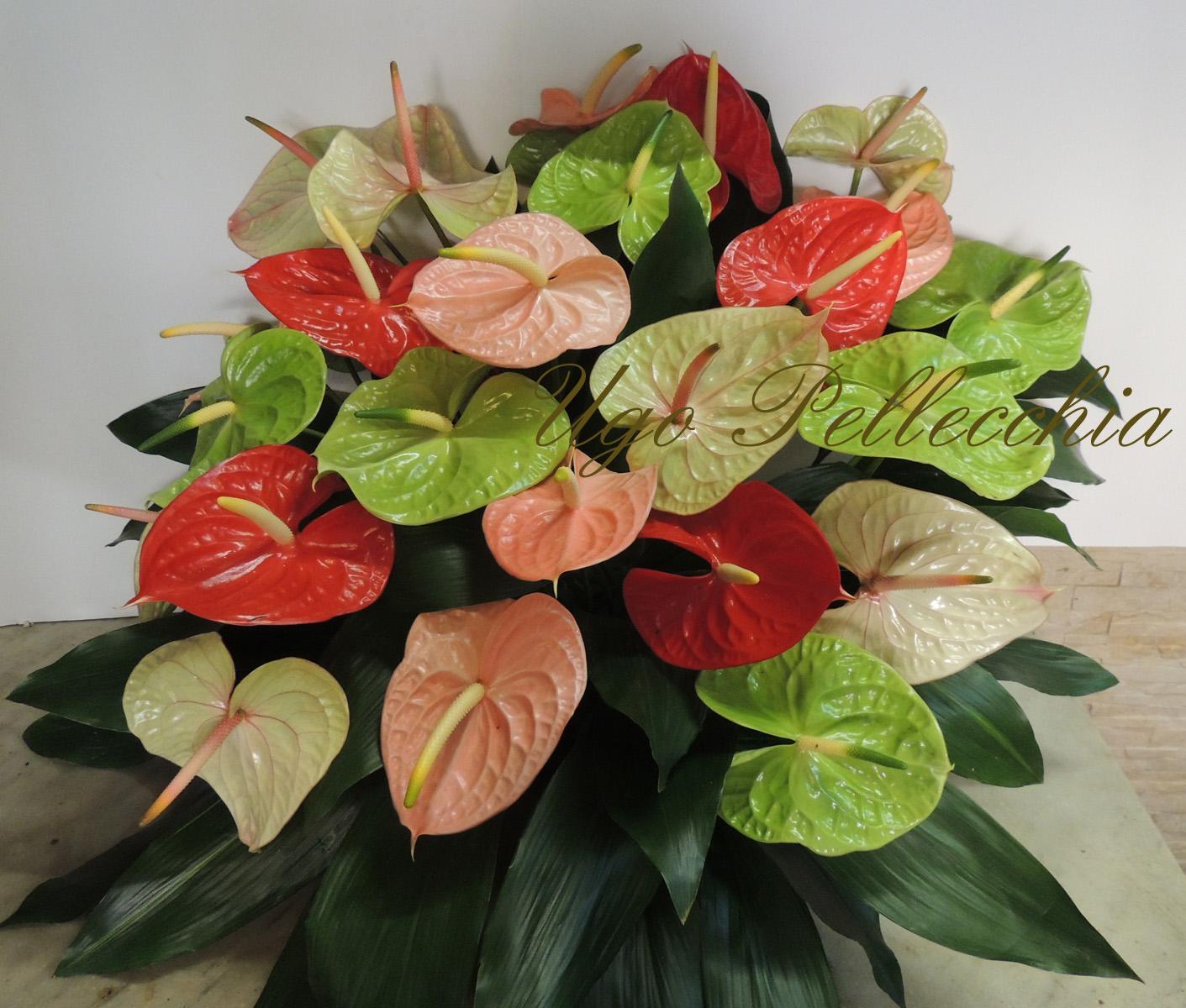Fiori composizione anthurium for Anthurium rosso